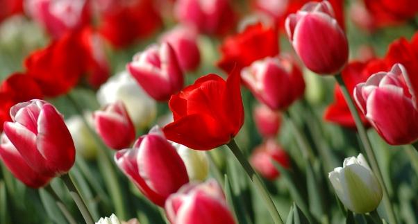 10 Bunga  Indah Termahal di Dunia Apaan tuh dot Com