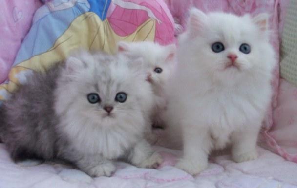 Gambar Anak Kucing Lucu Gambar C