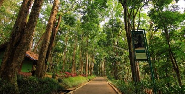 Foto Taman Hutan Raya Juanda, Bandung