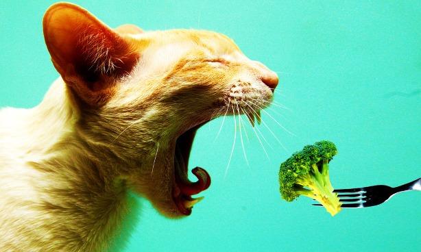 Jenis Sayuran Yang Baik Untuk Kucing