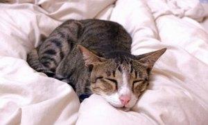 Penyebab Utama Diare Pada Kucing