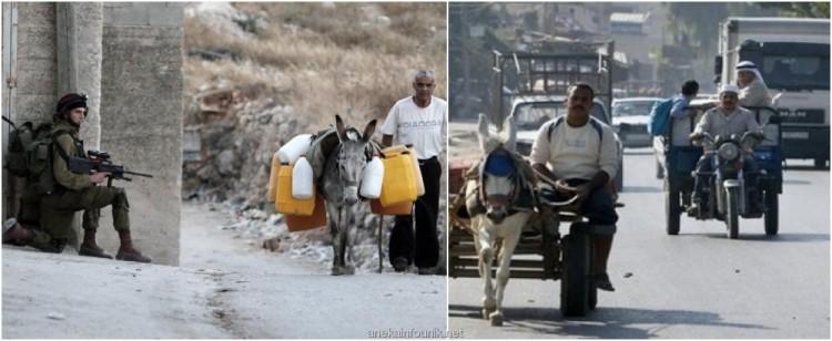 Foto Keledai Membawa Bom Digunakan Pejuang Palestina