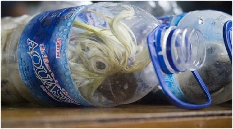 Kakatua dimasukkan ke dalam botol soft drink dan air mineral untuk menghindari bea cukai dan pihak kepolisian