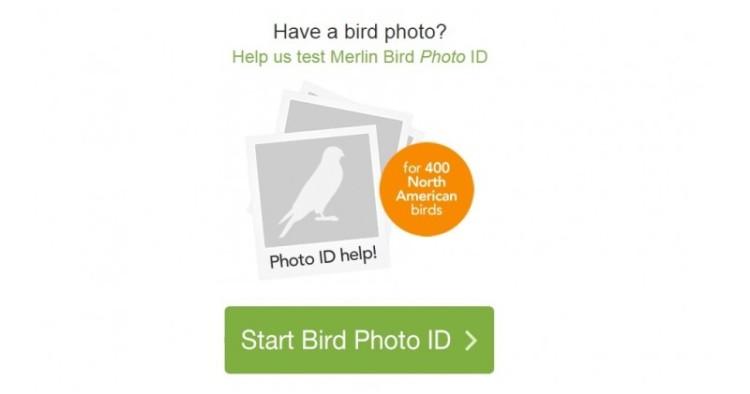 Tampilan Merlin Bird Photo ID, situs pengenal foto burung