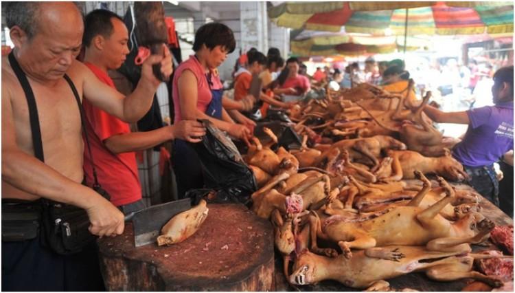 Pasar tradisional yang menjual daging anjing di China