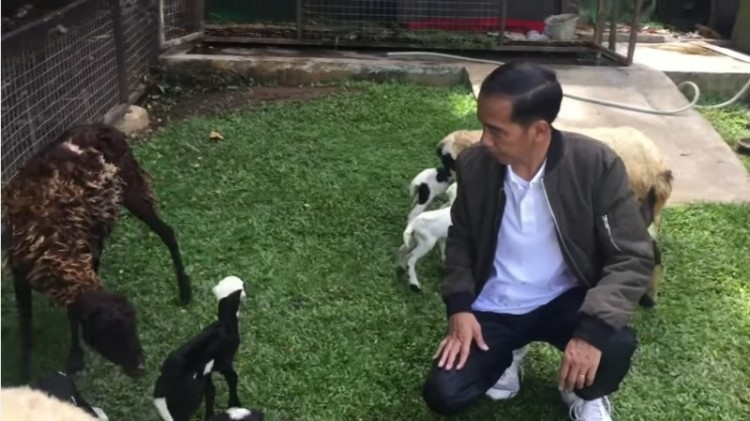 Jokowi pamerkan kelahiran anak kambingnya di Istana Bogor