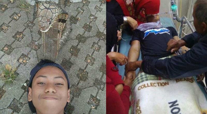 ABG di Bandung Tewas Dipatuk Saat Foto Ular King Kobra Peliharaannya